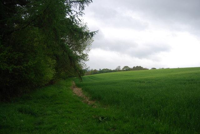 Wheat north of Round Wood