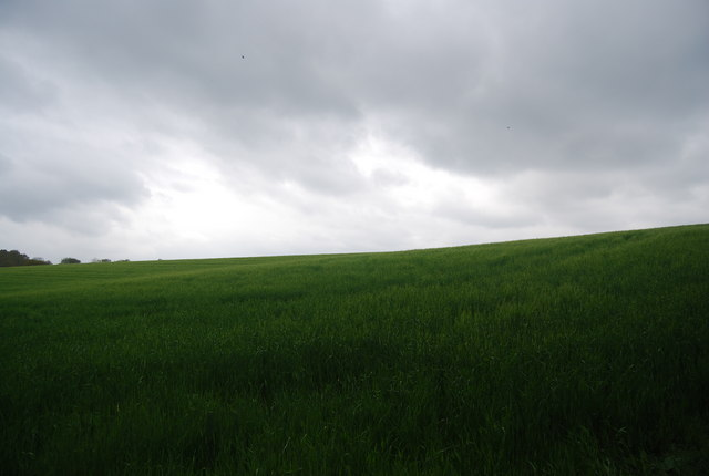 Wheat field by the Sussex Border Path