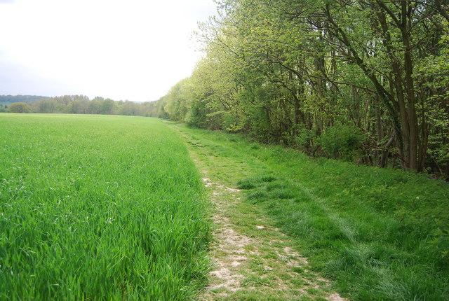 Sussex Border Path along Long Plantation