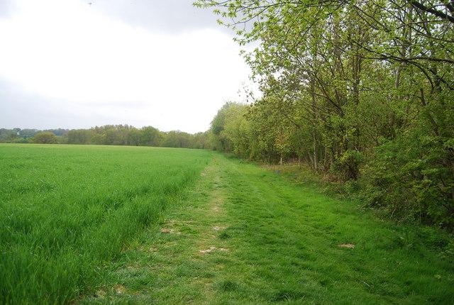 Sussex Border Path along Plantation Wood