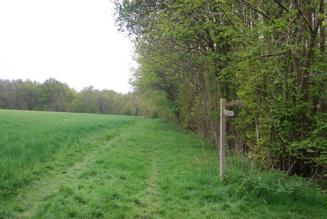 Sussex Border Path enters Long Plantation