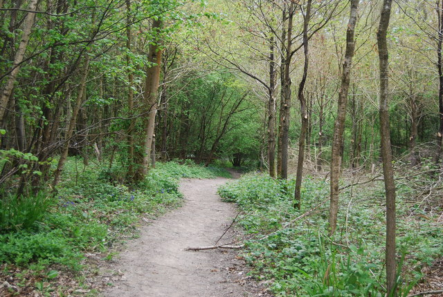 Sussex Border Path in Long Plantation