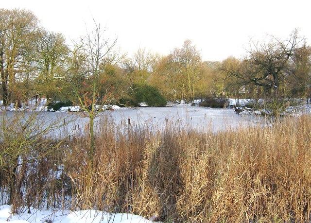 A frozen duck pond, Worden Park