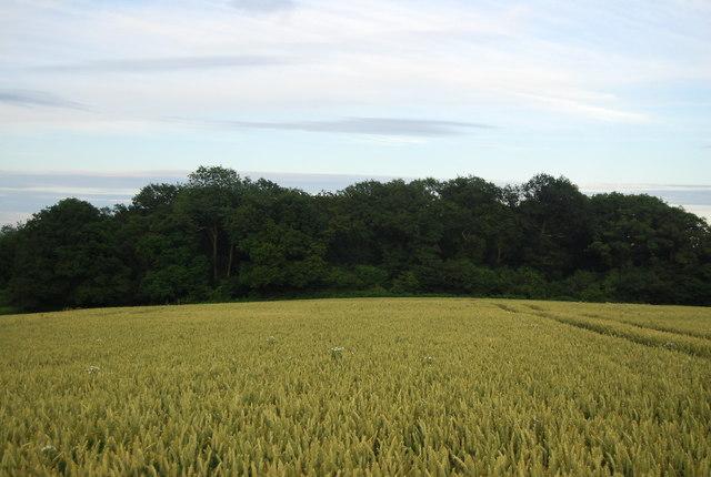 The Toll seen across a wheat field