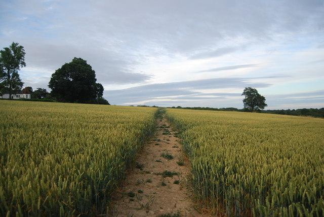 Footpath through the wheat to Bowzell Lane