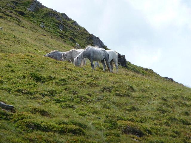Four ponies on Drosgl's lower slopes