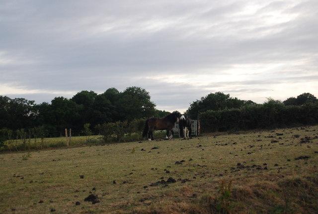 Horses guarding the kissing gate