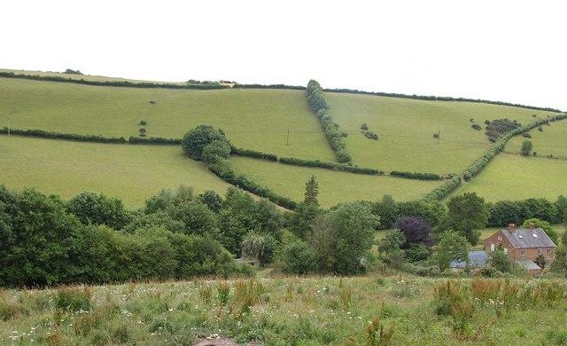 Raddington Bottom