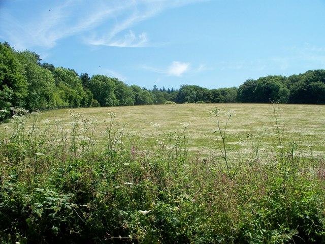 Craven Wood