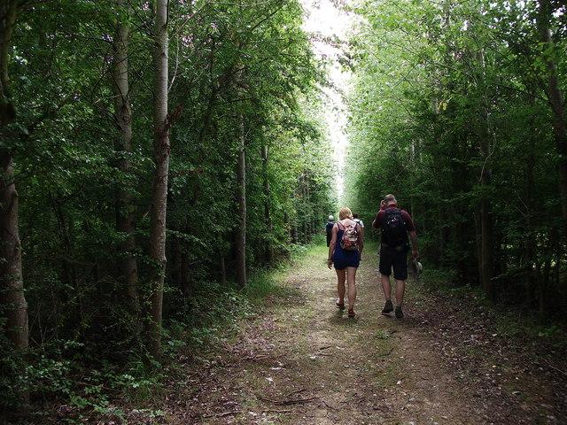 Walking through woodland near Barnrooden Farm