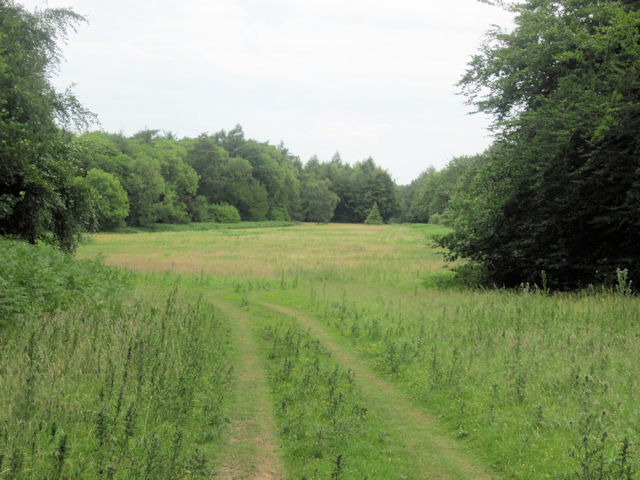 Clearing in Cabourne High woods