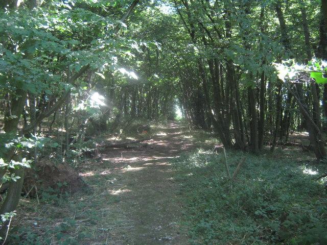 Footpath in Beecham Wood
