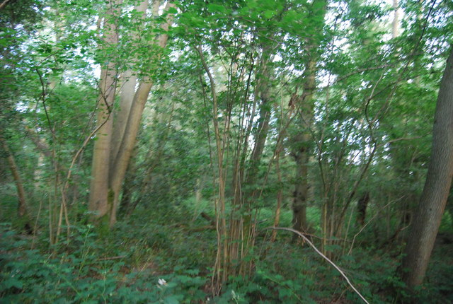 In Thickets Wood