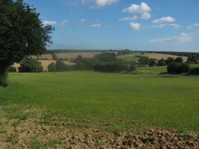 Flax field of Vale Farm