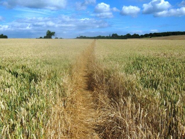 Footpath towards Blaxland Farm