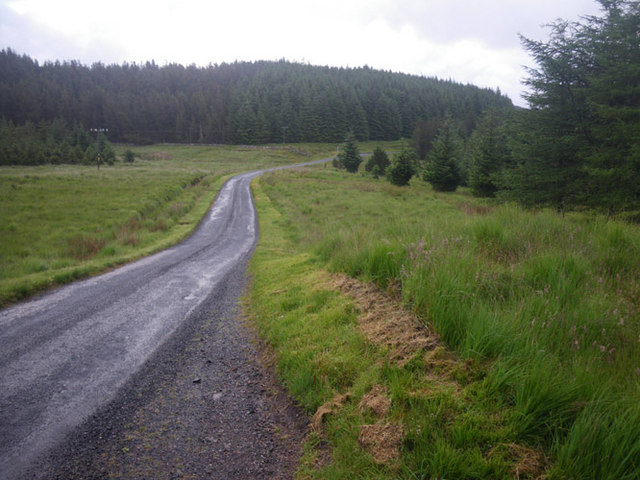 Bracken and forest flanking the road to Tobermory