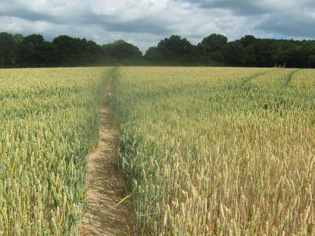 Footpath to Blaxland farm