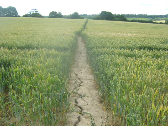 Footpath towards Broad Oak (2)