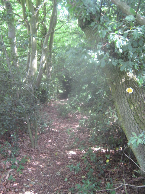 Footpath in Belce Wood