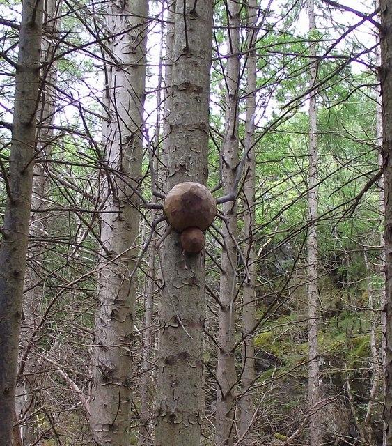 Spider sculpture Culag wood