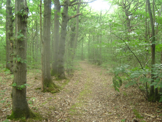 Footpath in Farthings Wood