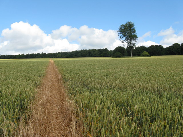 Well defined footpath south of Selhurst Park