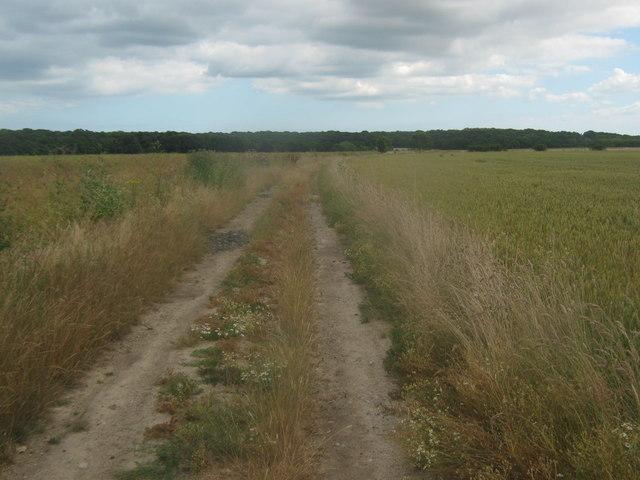 Track to Calfs Wood