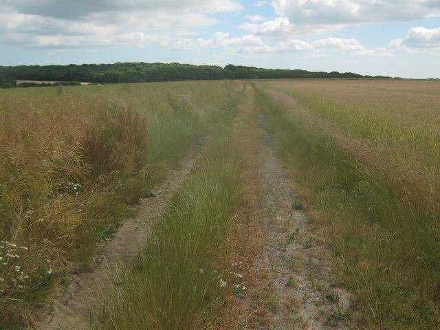 Footpath to Calfs Wood
