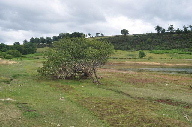 Exmoor : Wimbleball Lake & Tree