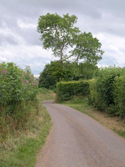 Lane on Shute Hill