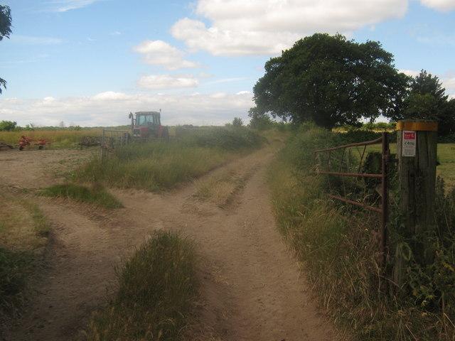 Footpath towards Calcott
