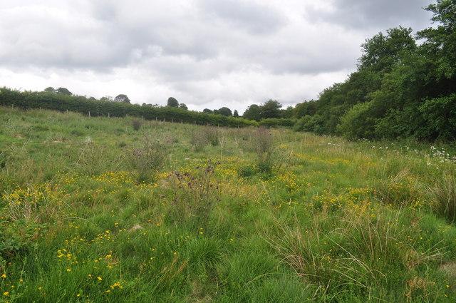 Exmoor : Wimbleball - Grass