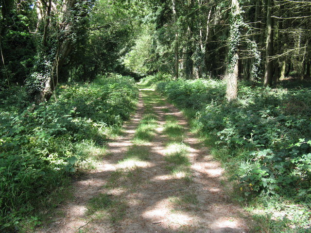 The Monarch's Way passing through woodland at Selhurst Park