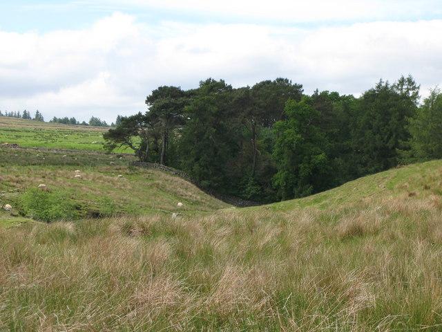 Pastures and woodland around Coanwood Burn