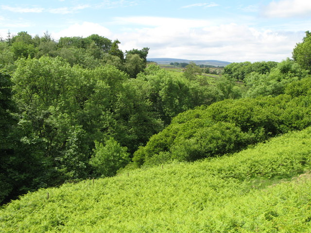 Woodland around Coanwood Burn