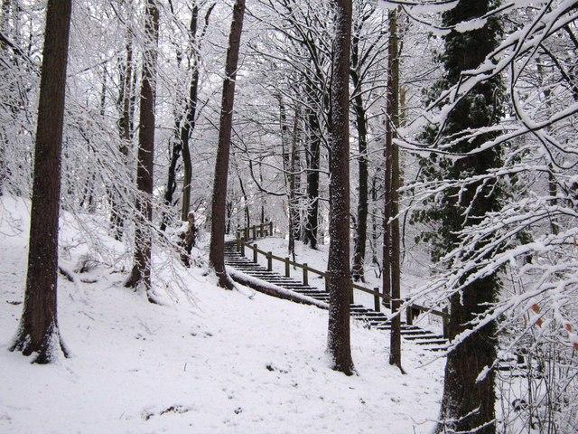 Steep steps in the wood