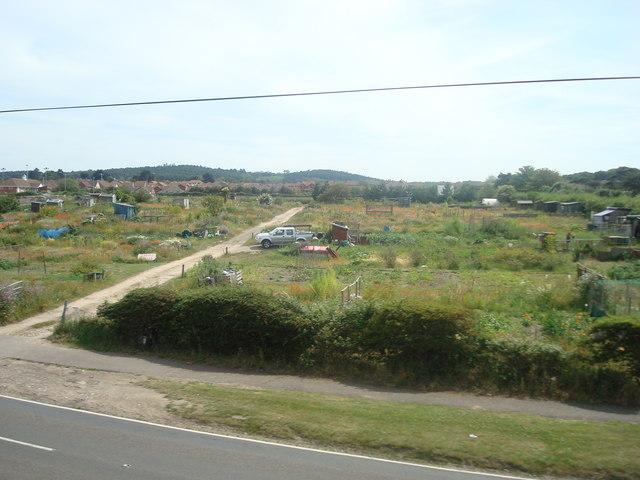 Allotments near Sheringham