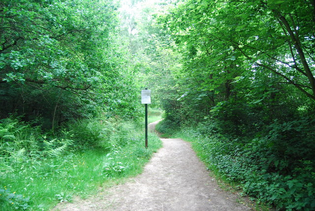 Path across Rusthall Common