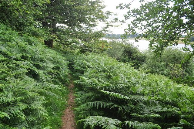 Exmoor : Wimbleball Lake Footpath & Ferns