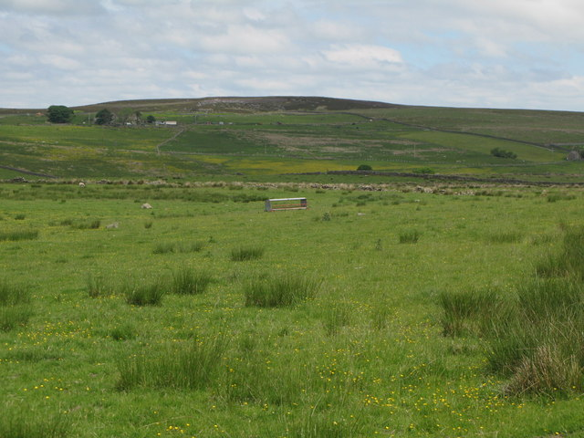 Pastures south of Ramshaw