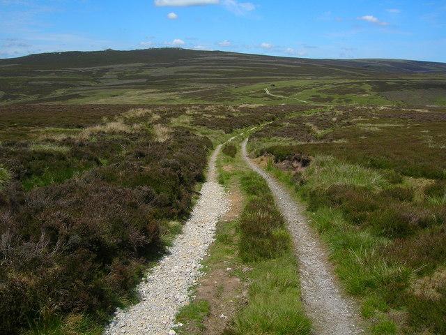 Track on Embsay Moor