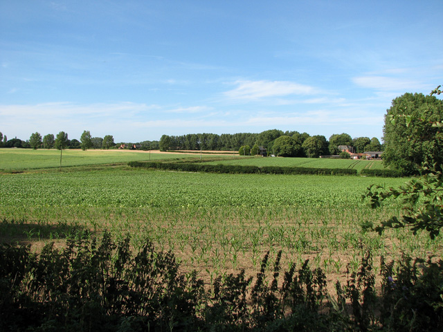 Fields south of Upton Green