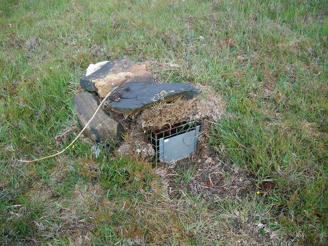 Hedgehog trap, Benbecula