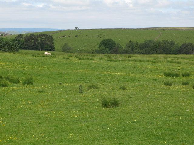 Pastures around Park Burn