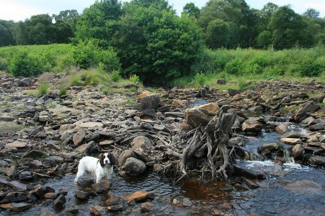An unnamed burn or Allt enters Loch Shin