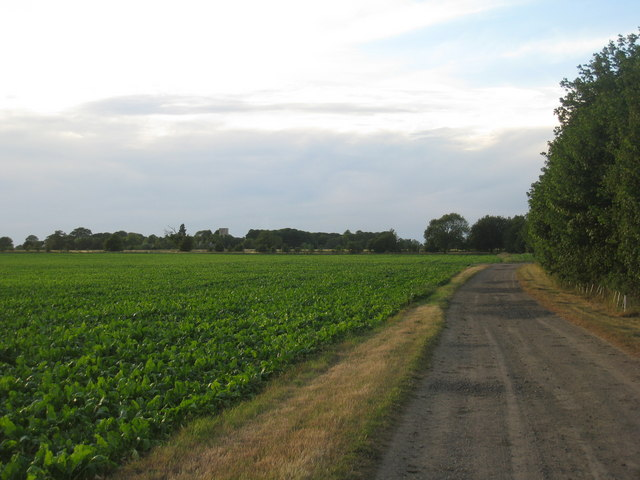 Farm track near Redbourne Hall