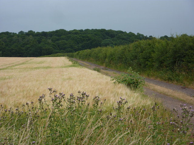 Field of barley and track towards Whisker Hill
