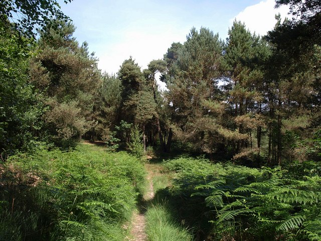 Path in Uphams Plantation