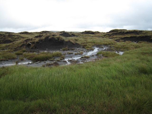 Peat Bog on Black Hill Moss