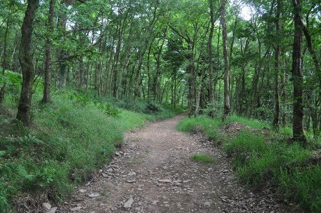 Exmoor : Wimbleball Woodland Path